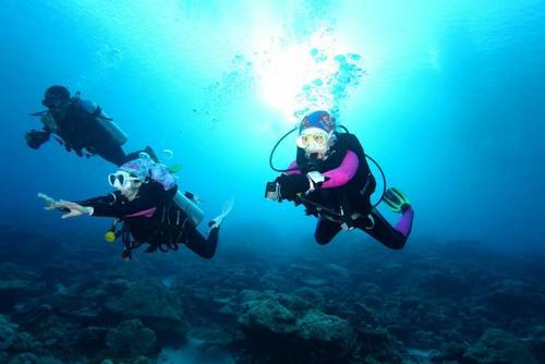 他领游客探秘海底嬉戏海豚 20余海岛教练手把手教潜水 总流水180万