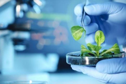 经纬中国领投一家生物技术公司 创始团队来自麻省理工 专注工业生物制造技术