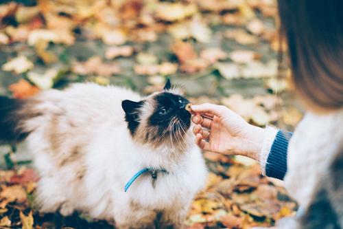 中国养狗比例达60% 养猫比例近40% 聊聊宠物经济发展的痛点与机遇